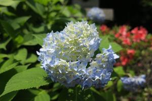 晴れ時々花の寺巡り