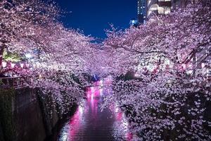 春の!さくら満喫デート【山手線(目黒〜池袋〜駒込)】