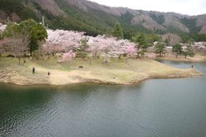 京都駅から春の美山へ直行!MIYAMOBI散策プラン② 美山町西エリアのおすすめスポットをご紹介!