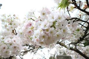 京都駅から春の美山へ直行!MIYAMOBI散策プラン③