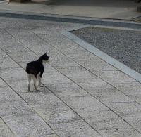 西方寺・普明閣の写真・動画_image_162922