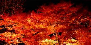 [神奈川] 紅葉をゆっくり楽しめる隠れスポット♪