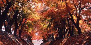 🍁紅葉狩り🚗河口湖と浅間神社⛩