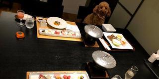 【鹿児島・霧島】愛犬と一緒旅♪
