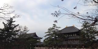 元旦は奈良で!スペシャルな初詣プラン♪