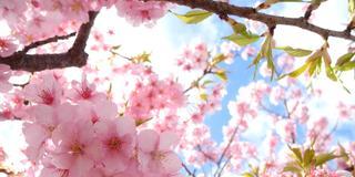 河津桜が終わっていても大丈夫!東伊豆・下田は見どころがいっぱいあります☆