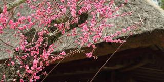 すべてがフォトグラフィ奈良公園