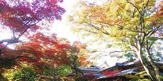 「そうだ、京都・洛西の穴場の寺社、行こう。」