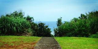 「東洋のガラパゴス」奄美大島の海めぐり