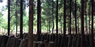 奥大山で原木椎茸狩り体験 〜里山暮らしの一部を垣間見る〜