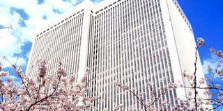 赤坂 桜坂でお花見 アークヒルズ桜まつり