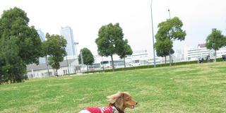 愛犬と一緒にMM21散歩