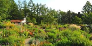 富良野~旭川にて草花を楽しむ庭園観光