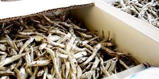 うどん県いりこだ市?香川・観音寺でグルメを食べつくそう♪