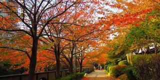 【感性を磨くお散歩@中目黒】体にやさしい定食ランチの後は目黒川沿いをお散歩、カフェで一服♪