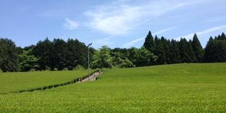 """富士山の見える""""農家民宿""""で土に触れるゆるり旅。"""