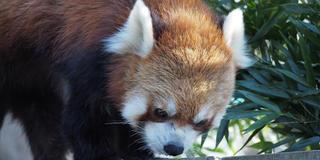 【横浜】無料の動物園から中華街、三渓園をめぐる休日