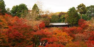 11月京都、紅葉を求めて②