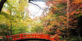 11月京都、紅葉を求めて③