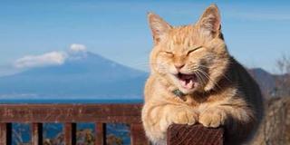 開運!幸せの西伊豆パワースポットめぐり 青の洞窟と猫店長に会いにいこう!
