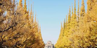 神宮外苑から渋谷へ