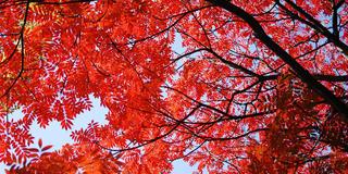 六義園から根津神社の紅葉を巡る