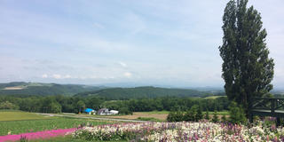 富良野と美瑛のお花の旅