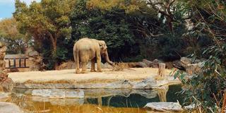 天王寺動物園+α