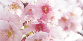 新宿御苑周辺のオシャレカフェ巡り♪自然・アート・グルメ・聖地巡礼も楽しめちゃう欲張りプラン