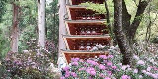 大和國奈良を旅します