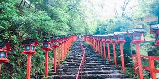 京都🌿青もみじ🍃🍃
