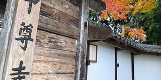 【 岩手 】季節を感じる紅葉とまったり神社とお寺巡り🍁