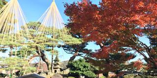 晩秋の北陸三県の旅🍁 富山 金沢 福井 プラス白川郷
