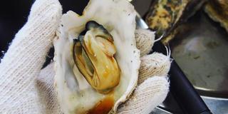 冬の塩釜・松島  美味しい海鮮を食べに行こう!