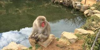 新しい嵐山の楽しみ方?モンキーパークで猿に癒されよう!