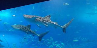 美ら海水族館と瀬底島、そして軽食 木曜館