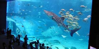 沖縄美ら海水族館に行くならば、美ら海「以外」も大事です