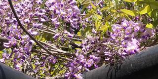 【京都】花見とゆるみくじと美味しいものめぐり