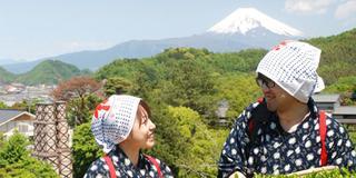 【日本の春を巡る!】絶景富士山!!桜づくしと茶摘み体験