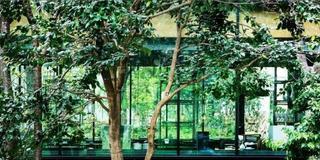 緑と光のカフェでのんびりする休日