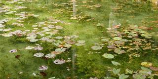 噂のモネの池を見て、温泉と美濃B級グルメを満喫する旅