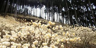 朝来市の写真で見る花巡り