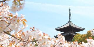 京都 きぬかけの路を歩く大人旅