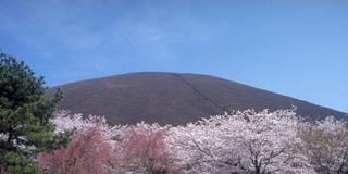 伊東 また来年!桜とスイーツ《更新中》