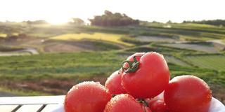 【横山史の淡路島ツアー】食体験+日本遺産+花の島+御食国