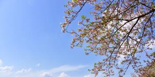 【春の熊本観光スポット20選】春の季節だからこそ行きたい人気の観光スポットランキングを発表!