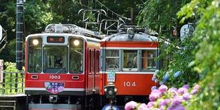 梅雨だから…そして今だからこそ敢えて行く!箱根の山であじさい&温泉ざんまい
