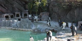 上野動物園で動物達に癒される休日