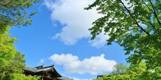春の京都青もみじ巡り