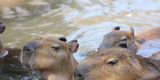 熱海へ。温泉と動物に癒される旅。